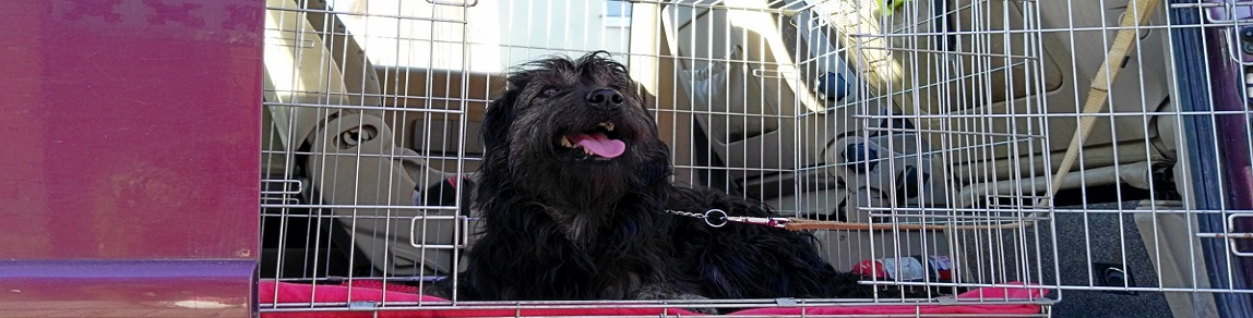 Taxi para mascotas aiguallonga
