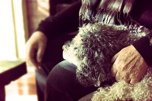 Servicio de asesoramiento canino